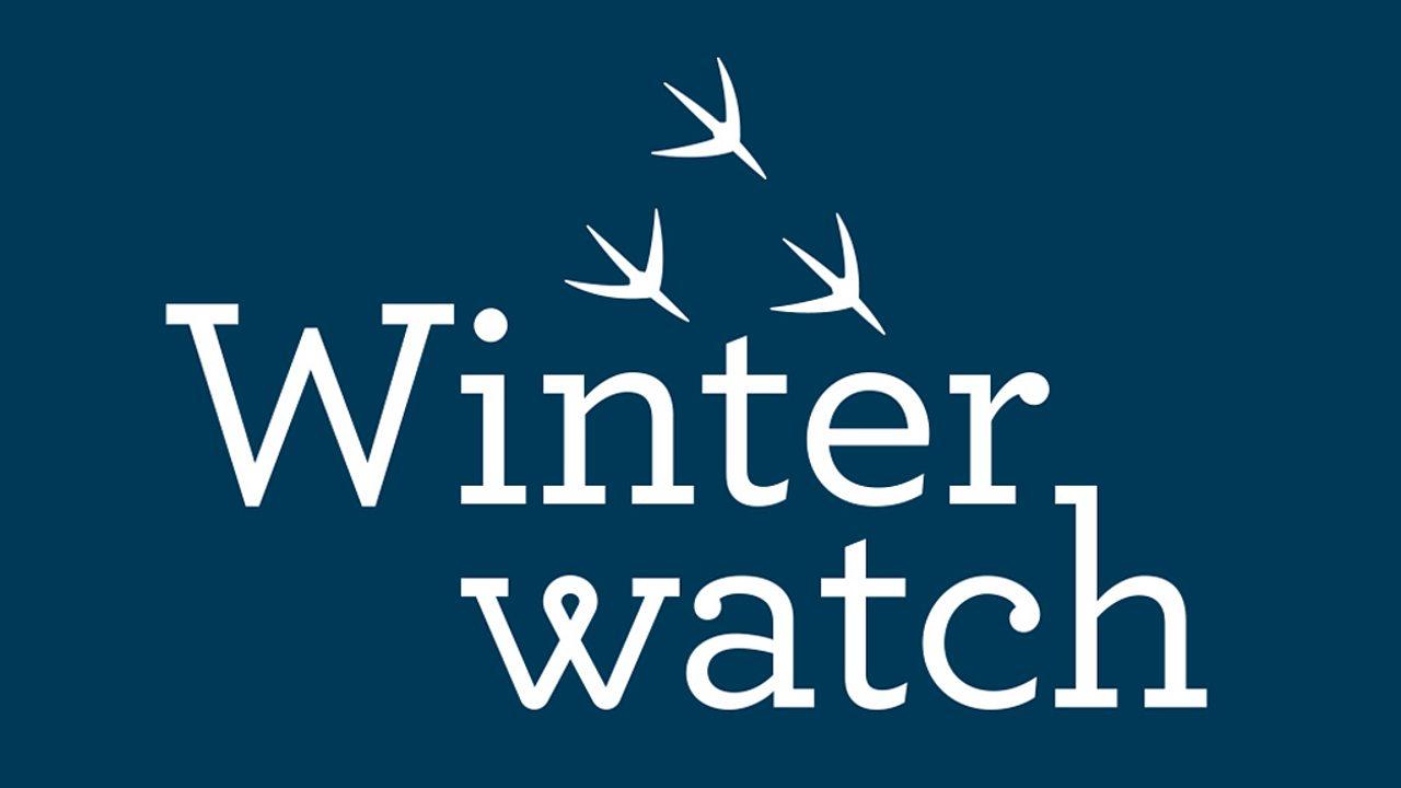 Winterwatch Live Lesson