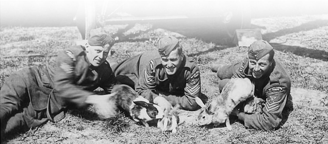 RAF men with pet rabbits on the Western Front in France during World War One