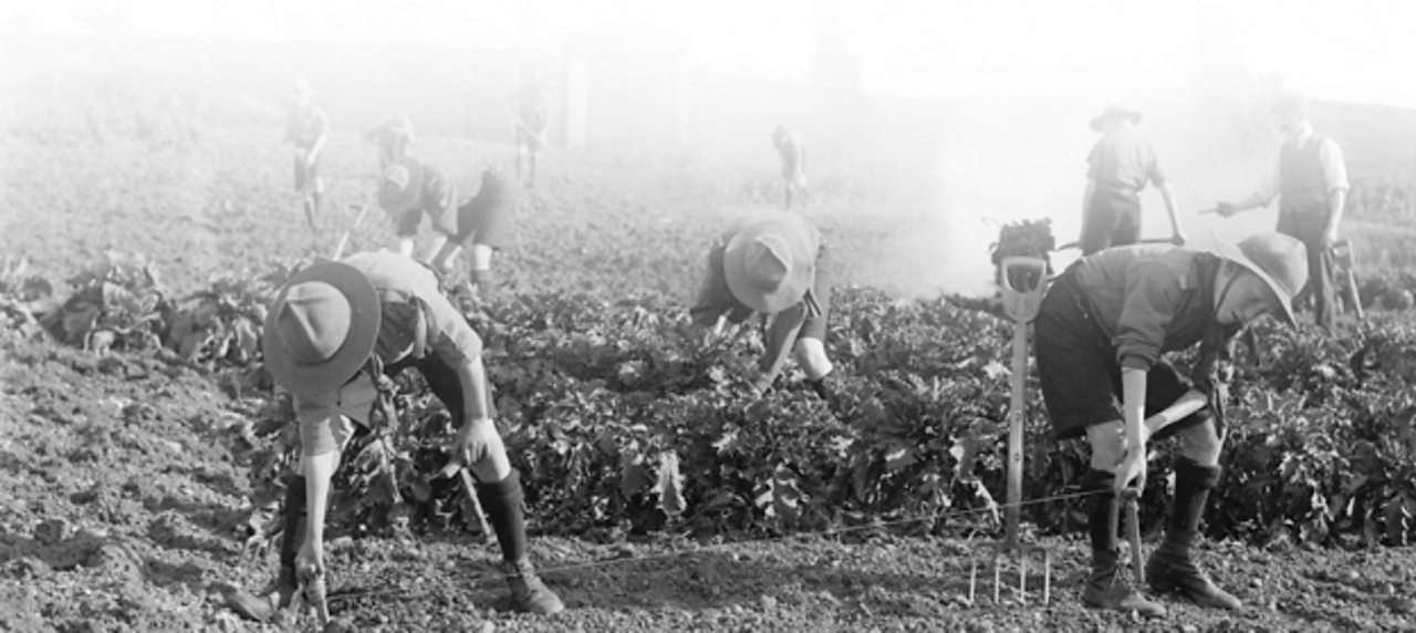Boy scouts working in a field during World War One