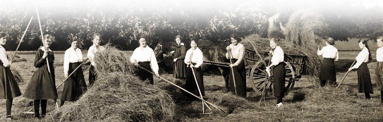 Young women raking hay near Northmapton in 1915