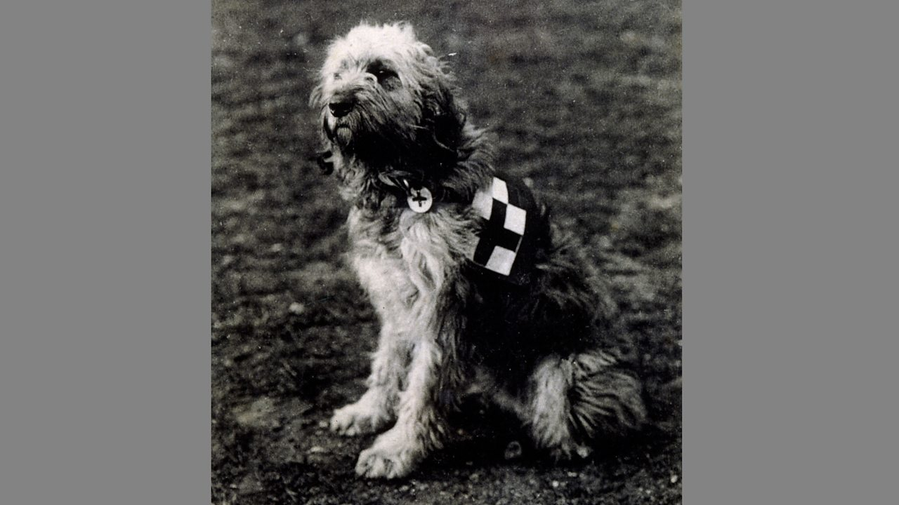 A casualty dog in a field during World War One