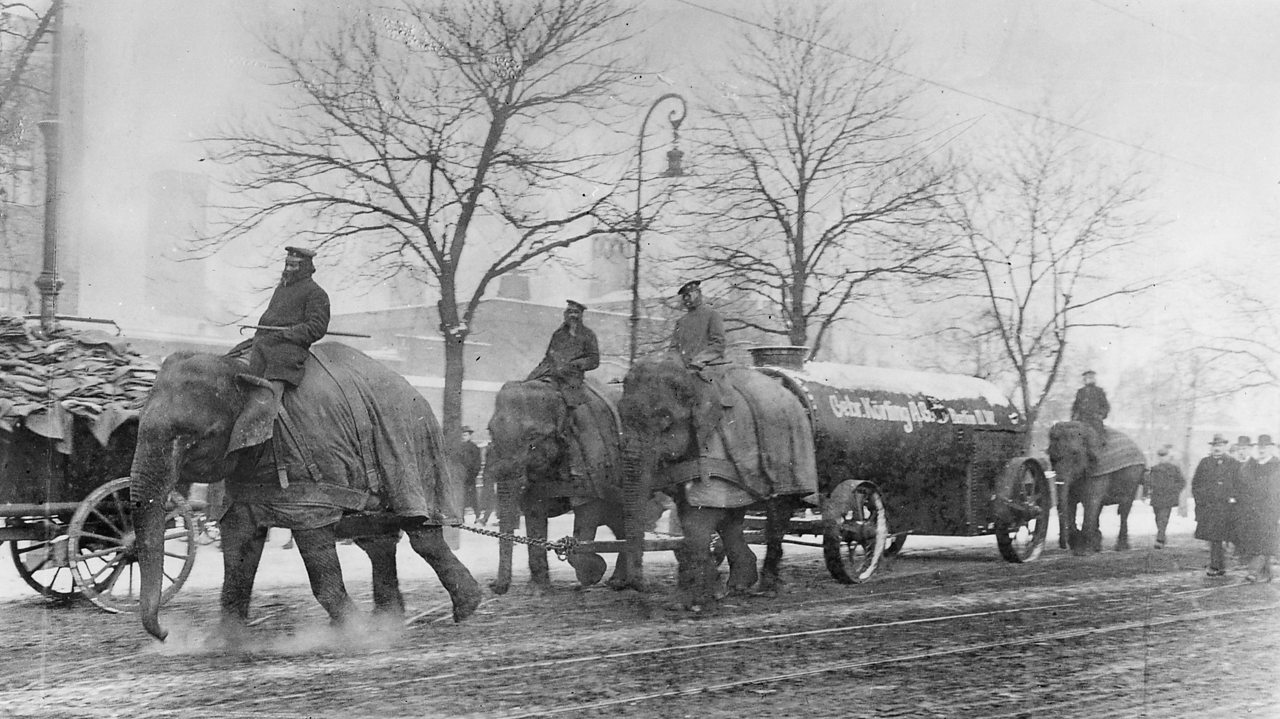 Elephants at work ploughing fields and pulling artillery during World War One
