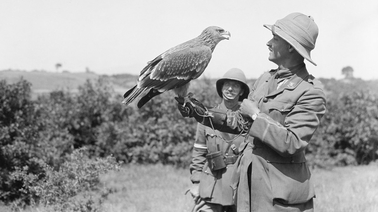 A golden eagle pet with a British officer in the Balkans in August 1916