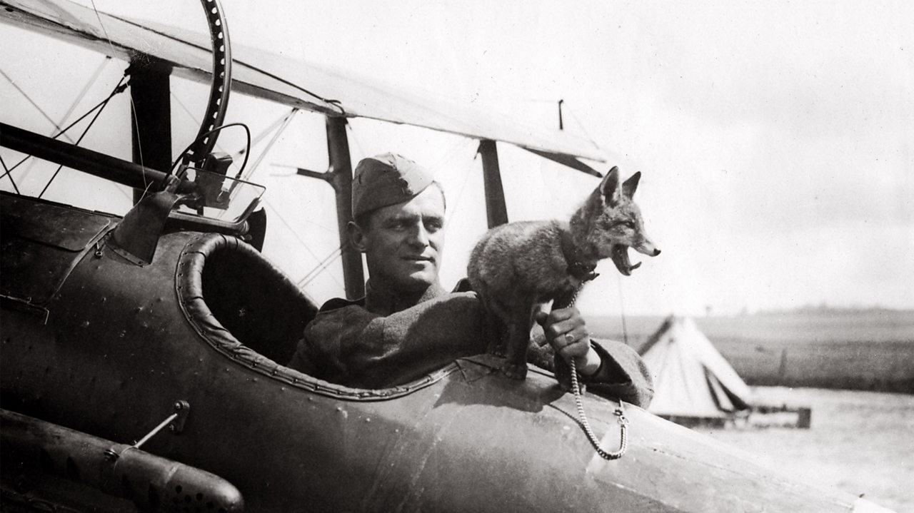 RAF fox mascot sitting on a plane with the pilot during World War One