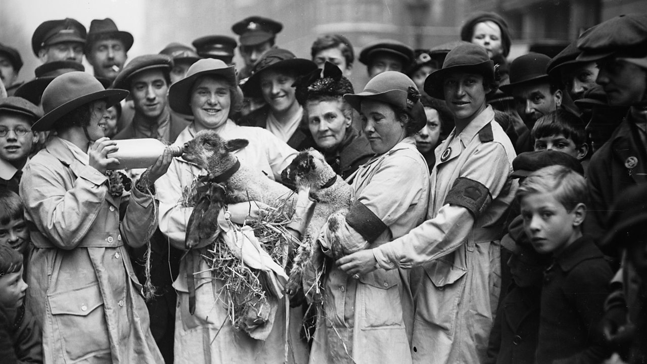 Girls from the Women's Land Army feeding lambs during a pause on their march around World War One