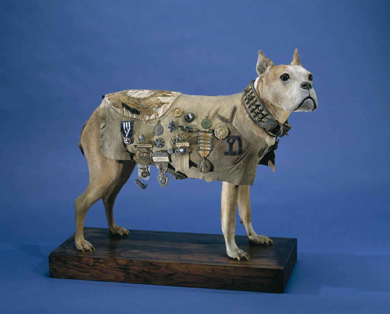Sergeant Stubby model