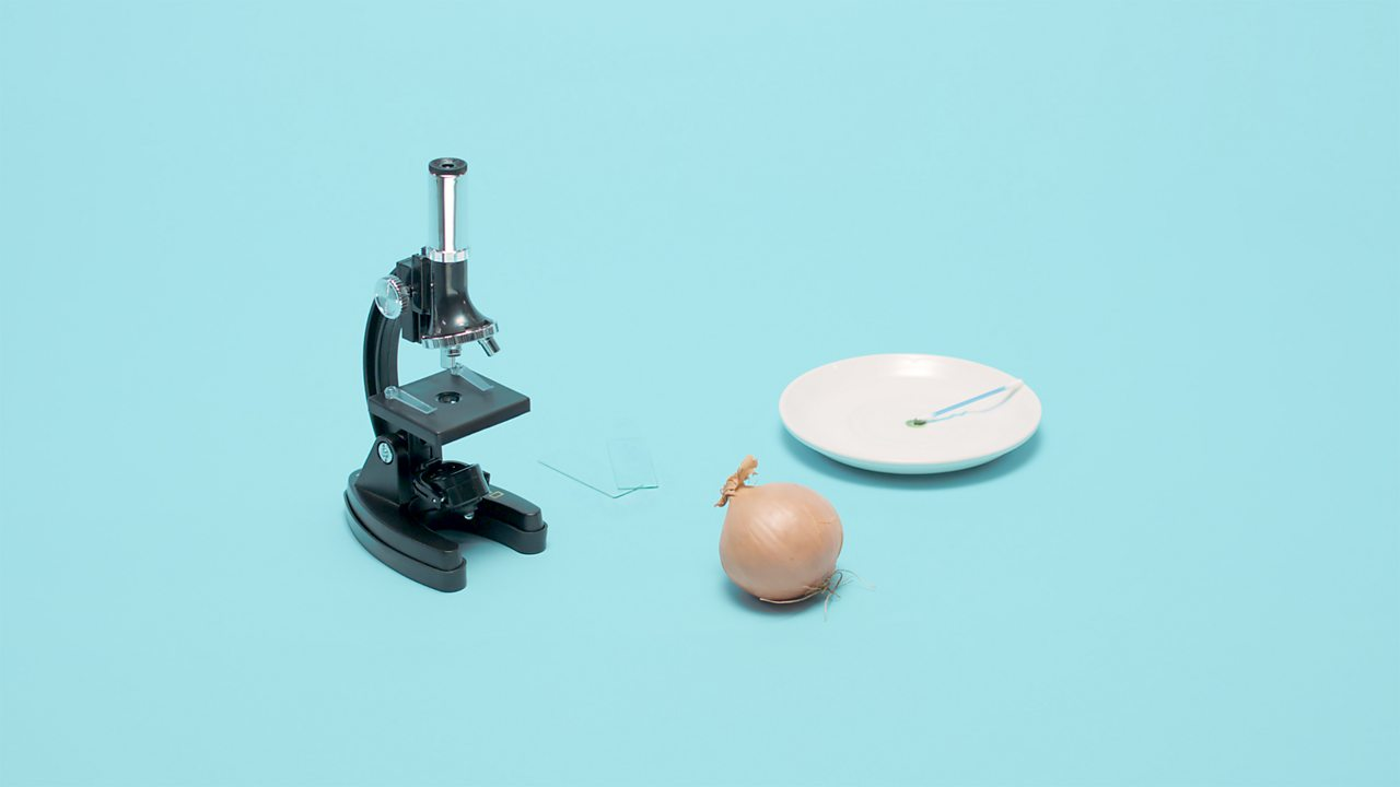 Image of microscope, onion, glass slides and a cheek swab.