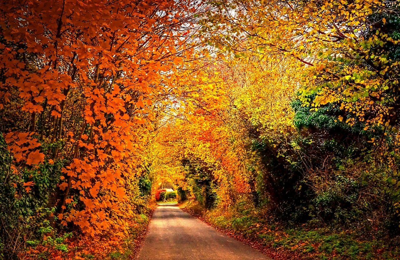 A country road surrounded by trees in Autumn