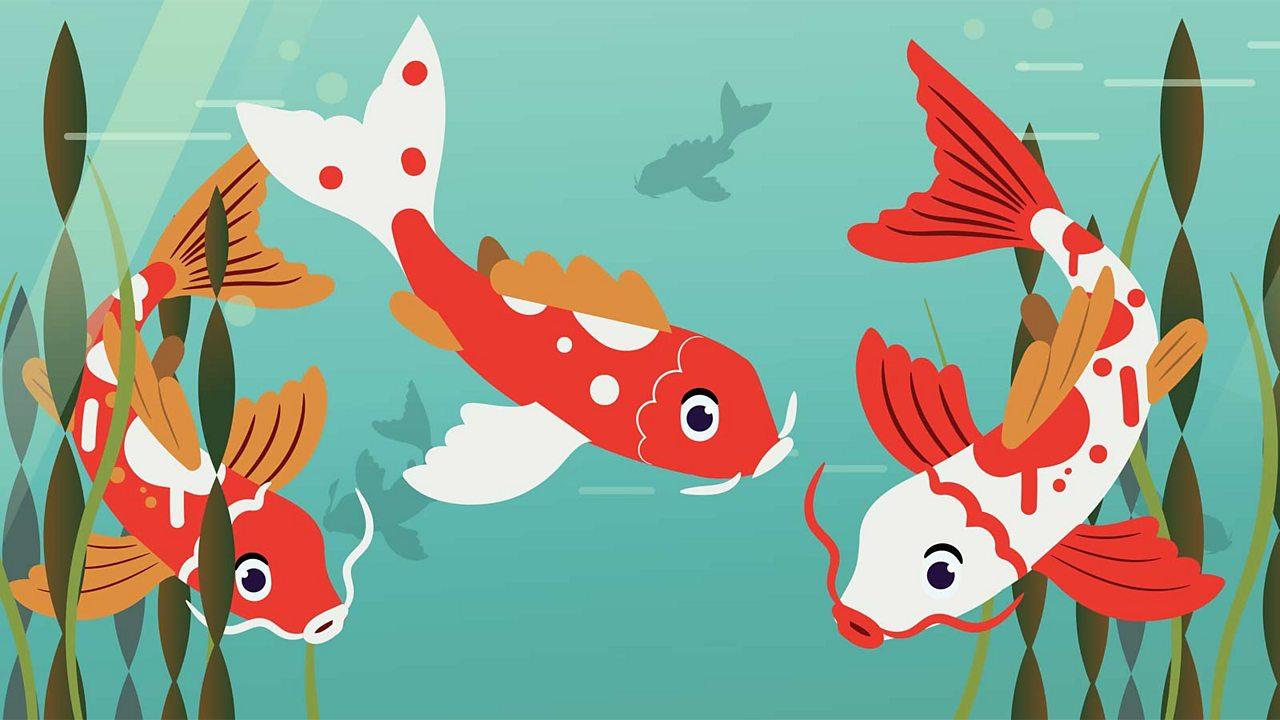 three beautiful orange and white fish