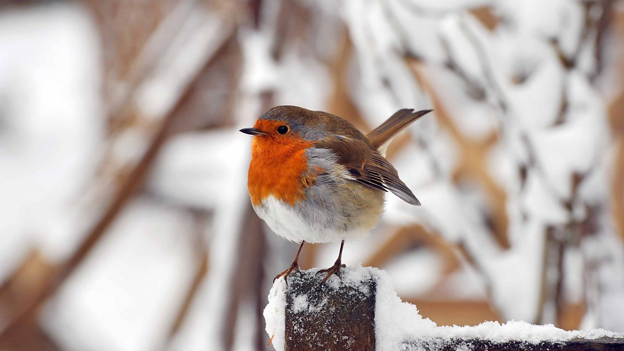 31st January 2019: Winterwatch - Live Lesson