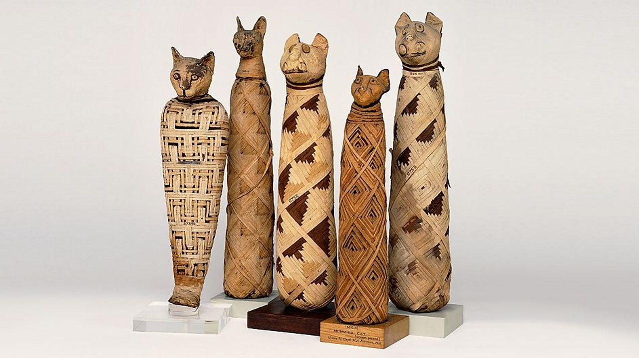 A photo of five mummified cats, wrapped up in intricate patterns