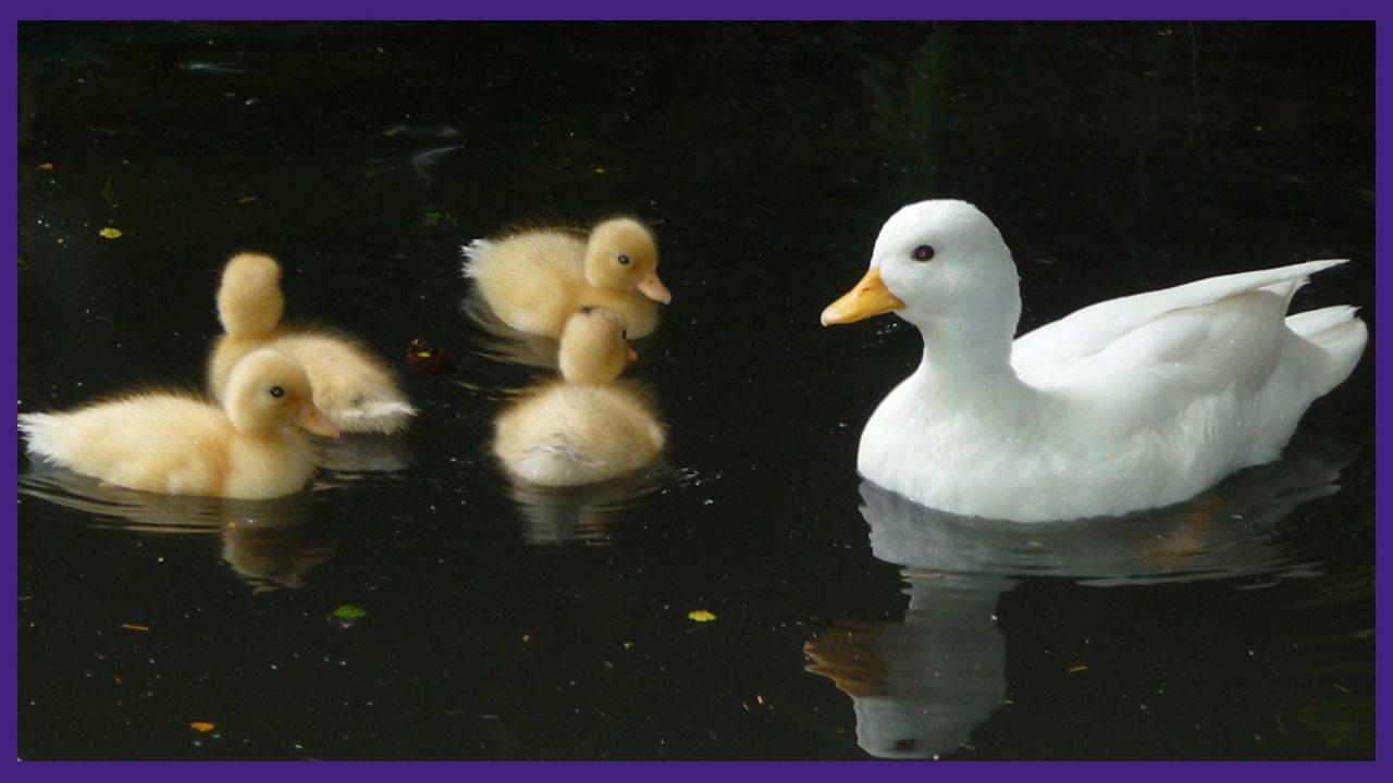 The Pond in Spring