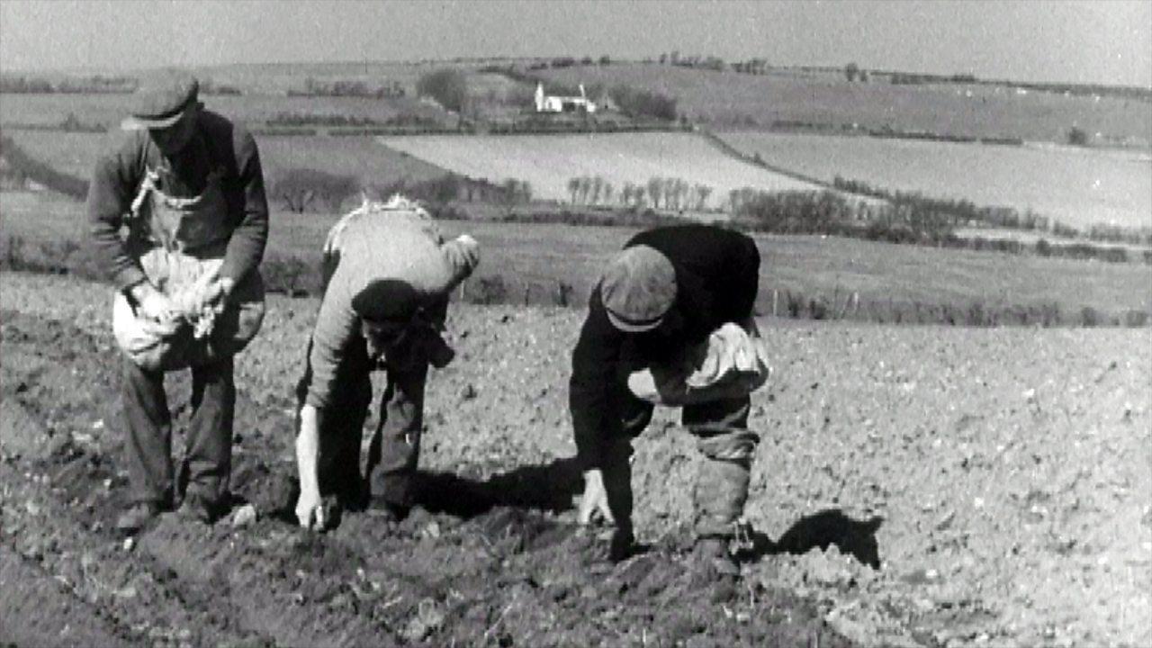Potato harvest on the Isle of Arran, 1949
