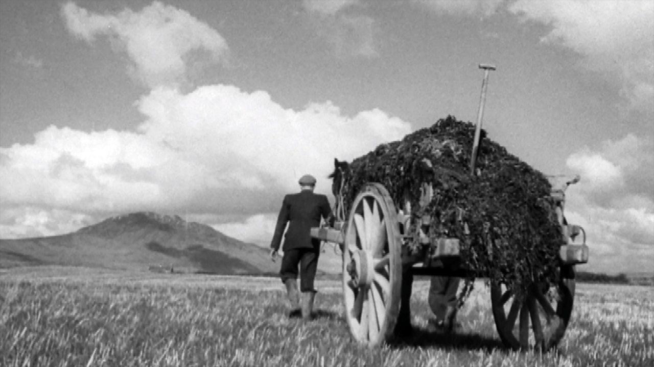 Where the praties grow, 1952