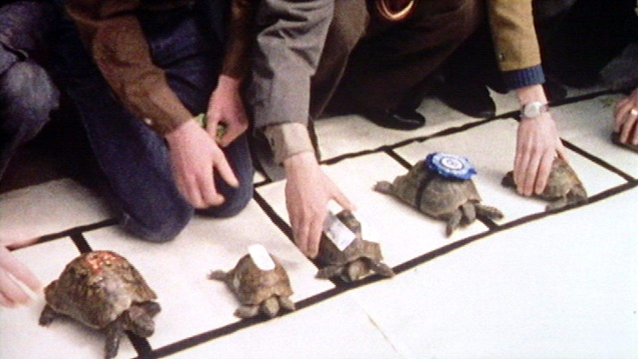 Freda the tortoise goes racing, 1974