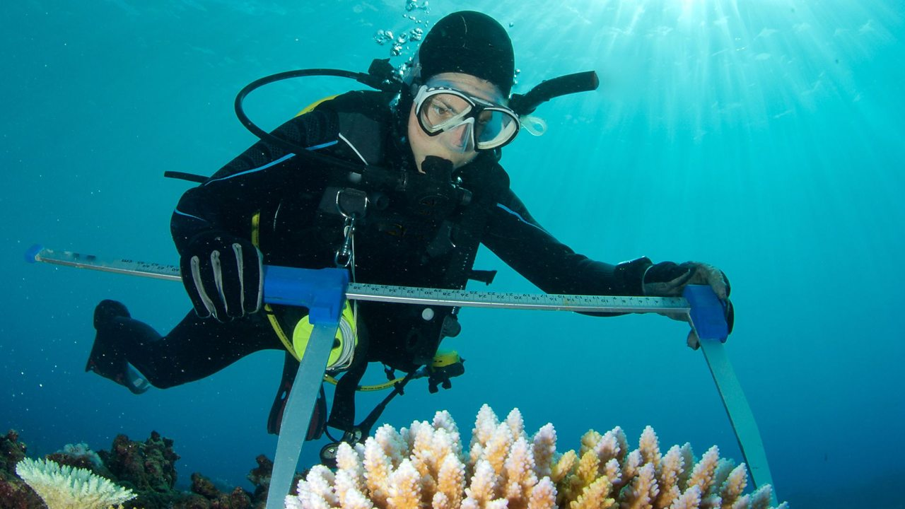 A diver measures coral as part of his work as a marine biologist.