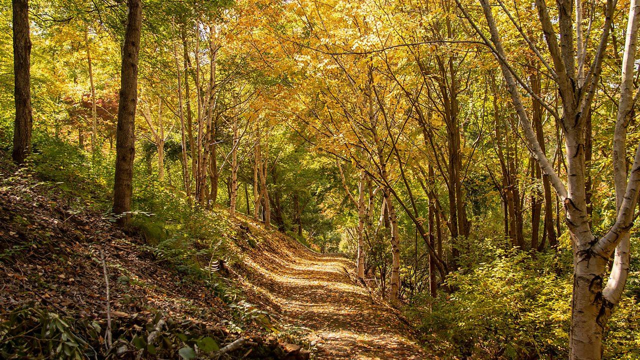 Woodland biome