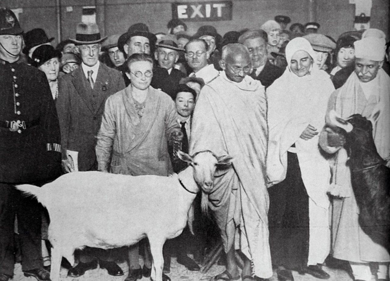 Black and white photograph of Gandhi in England with his goat