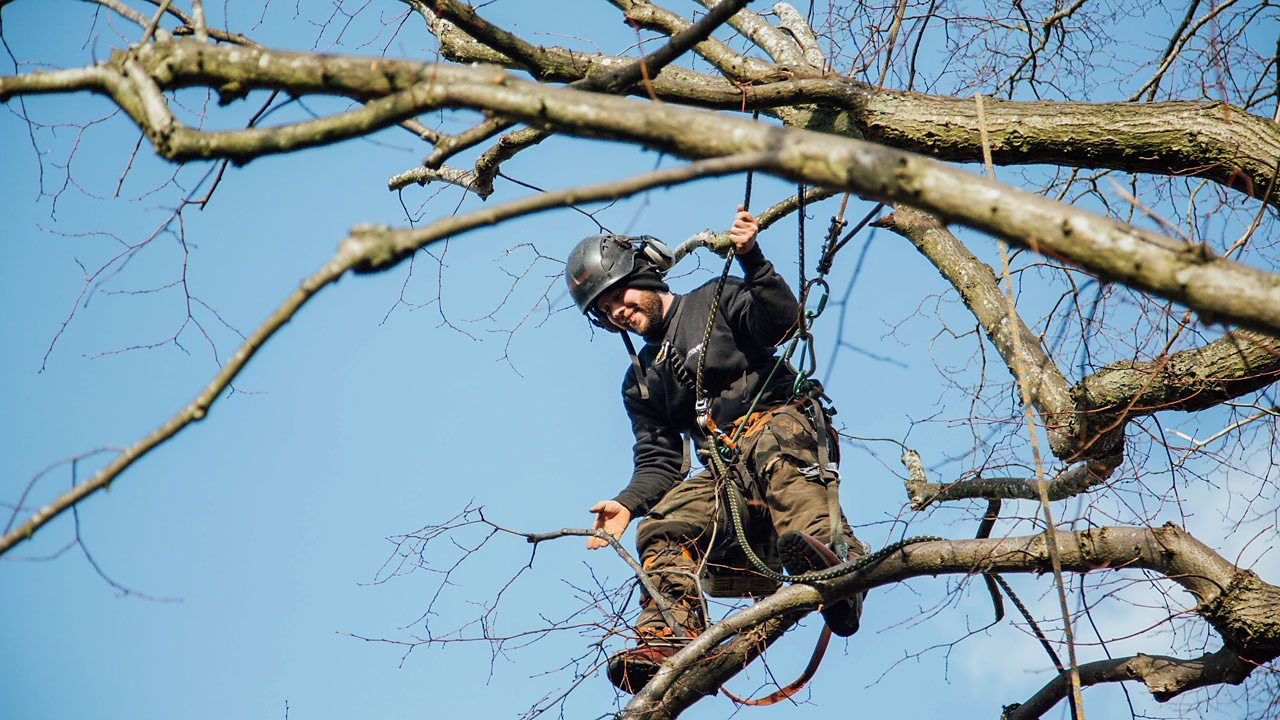 Daniel working up a tree.