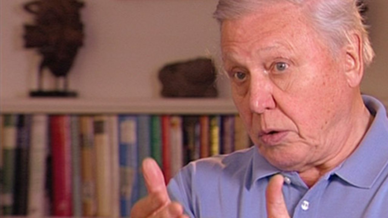 David Attenborough interview