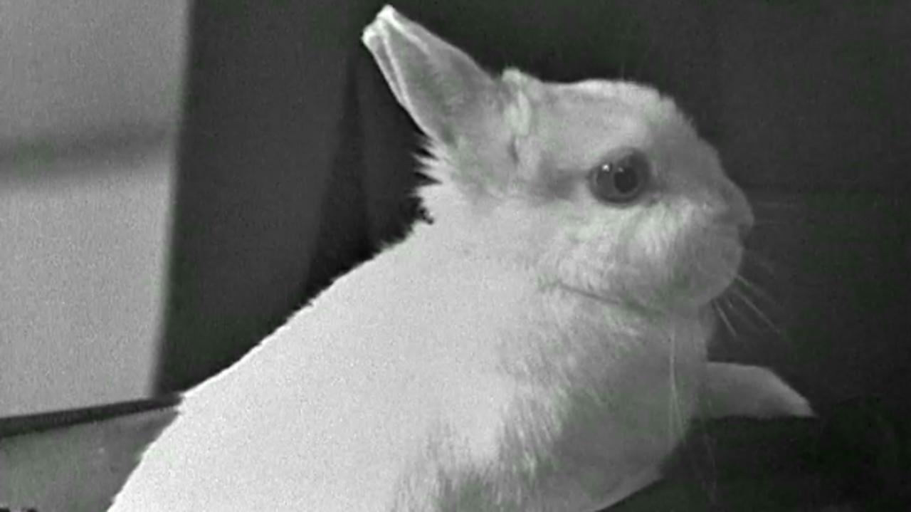 Huff the magic rabbit, 1970