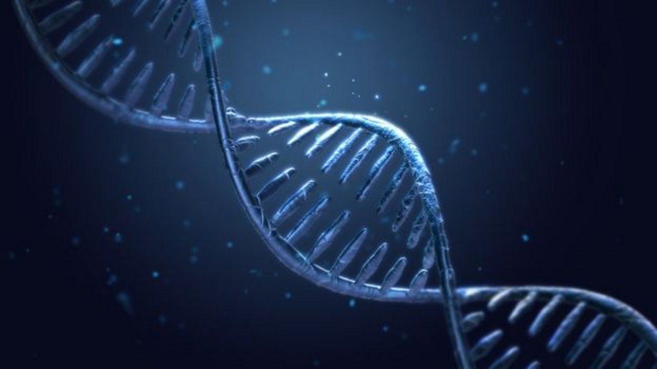 Inheritance, variation and evolution