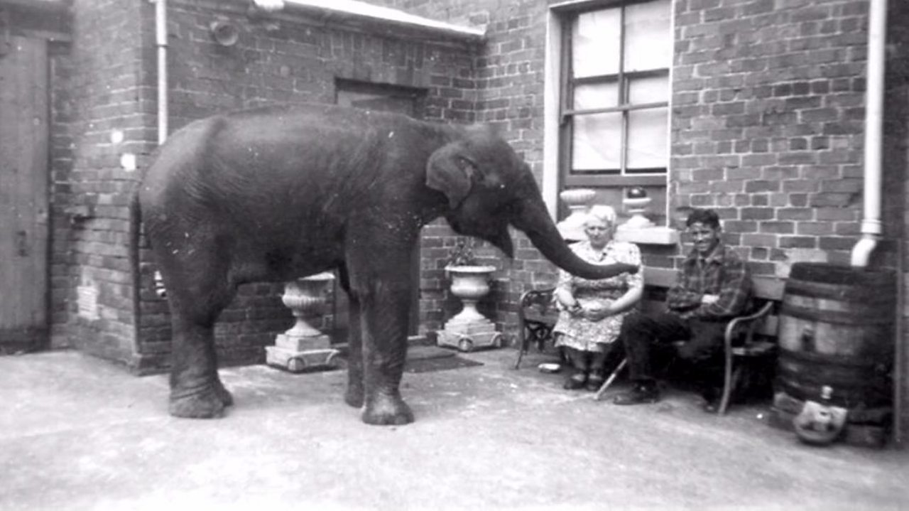 WW2: How did an elephant beat the Belfast Blitz?