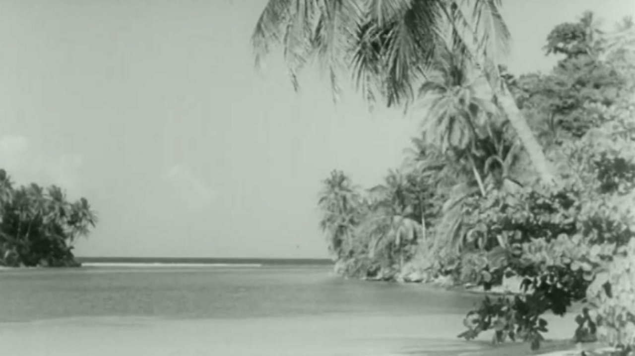 Palm beach interlude, 1953