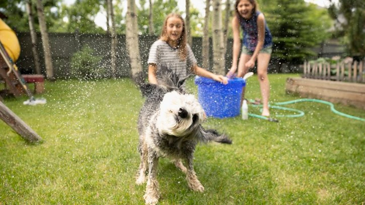 A dog shaking water everywhere after escaping the two tween girls trying to wash it.