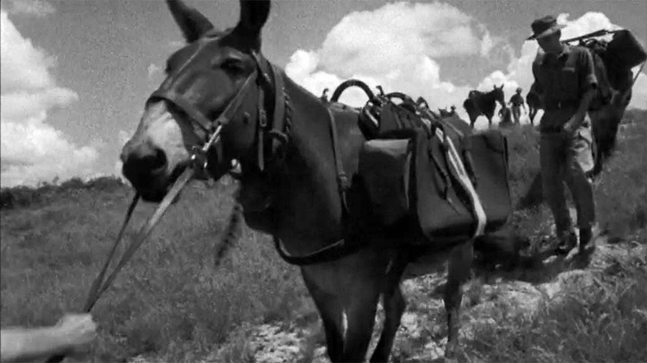 Last Army mule pack, 1966
