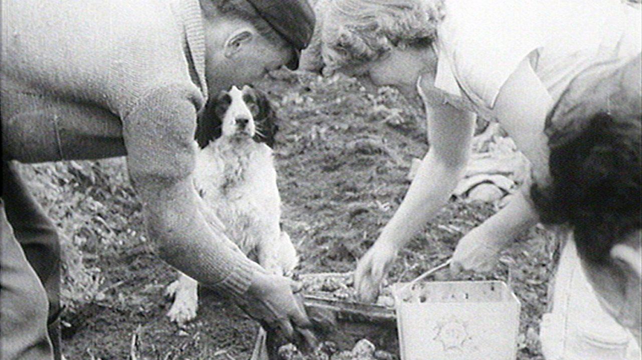 Meet the farming family, 1957