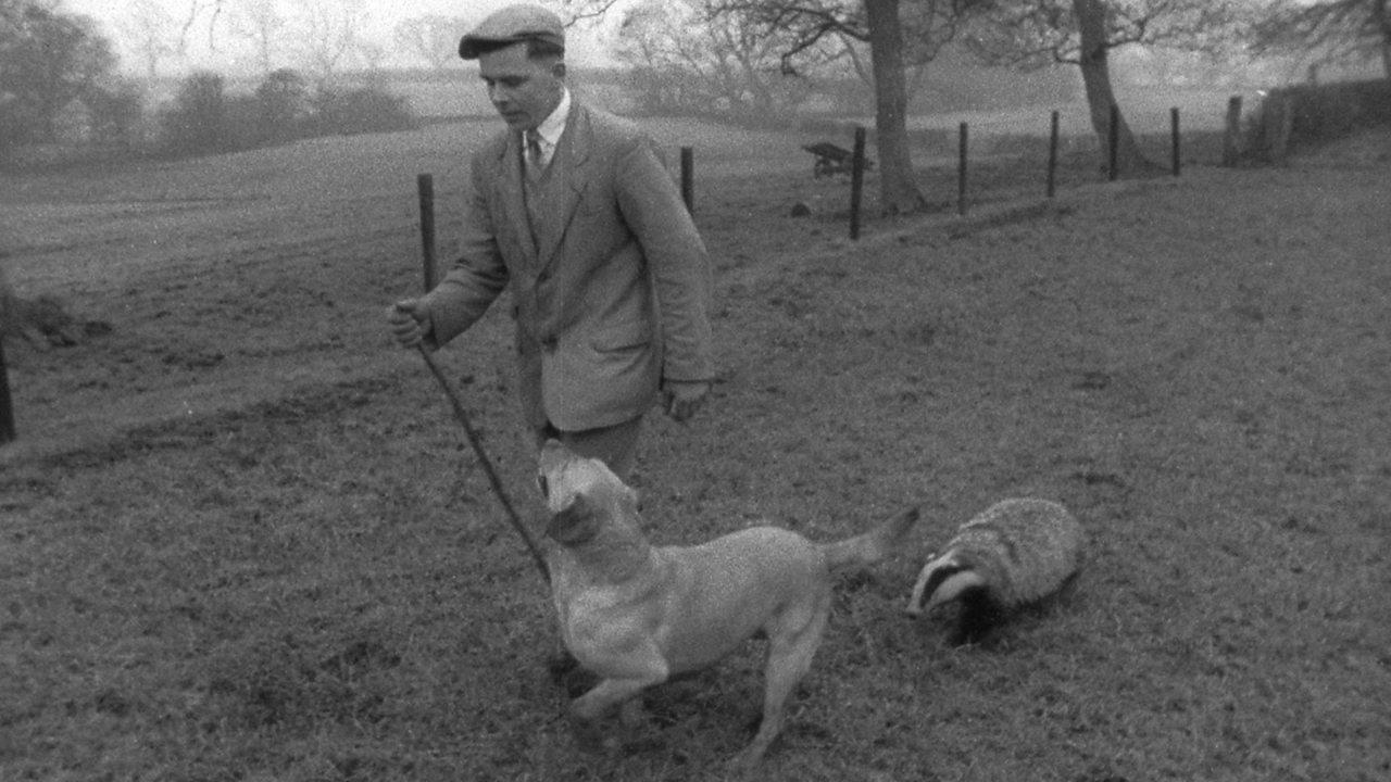 Yogi the Bugthorpe badger, 1961