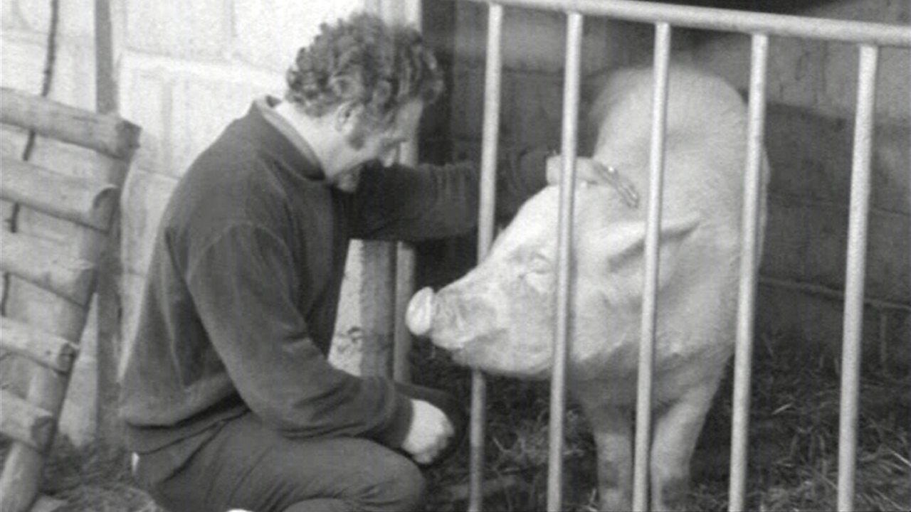 Pig-oletto, 1970