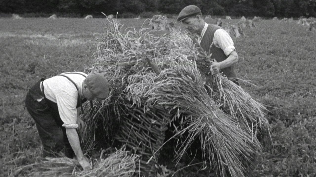 Make hay while the sun shines, 1951