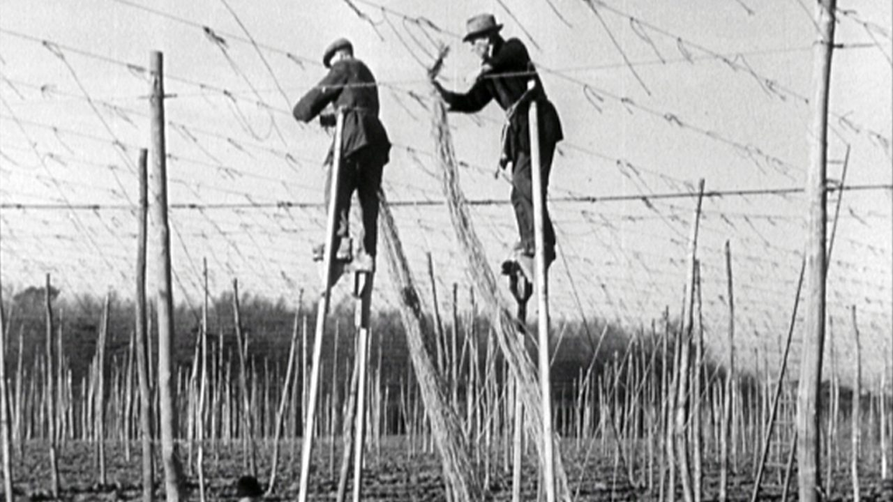 Hop gardeners wanted - circus skills useful, 1949