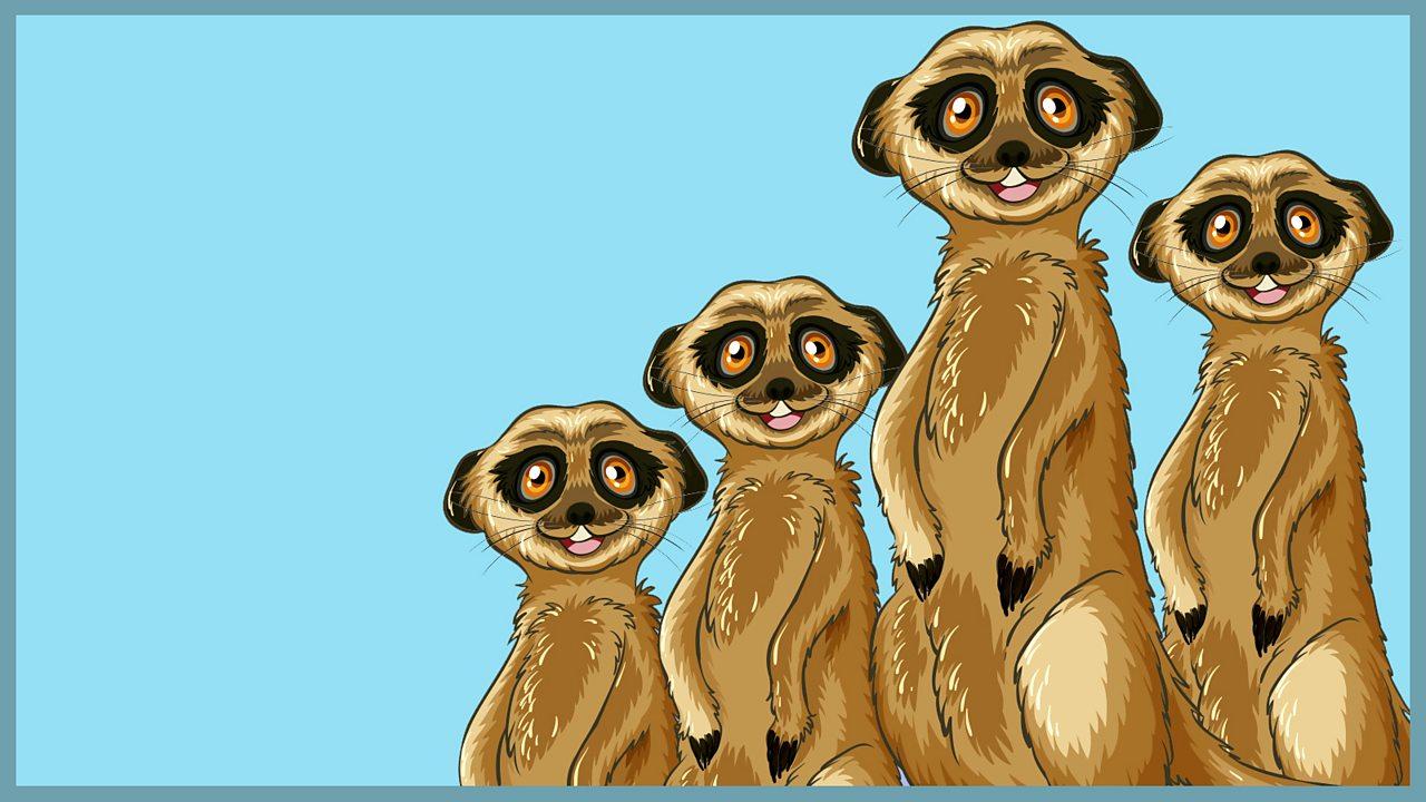 Pretty parrots and mischievous meerkats