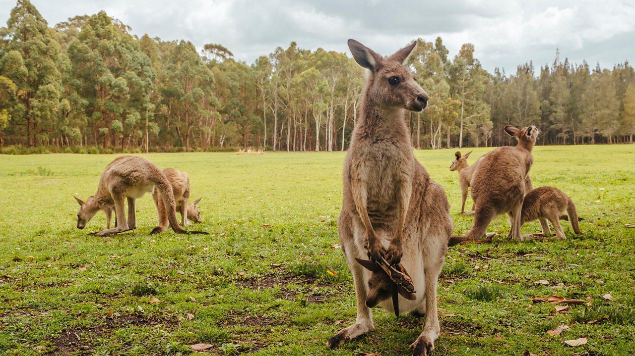 Australia: The land down under