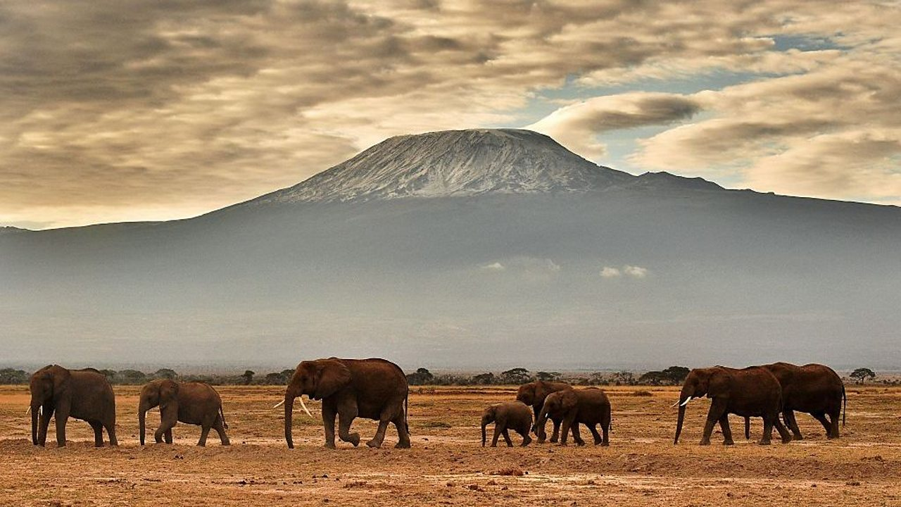 Africa: Deserts, fast cats and huge elephants