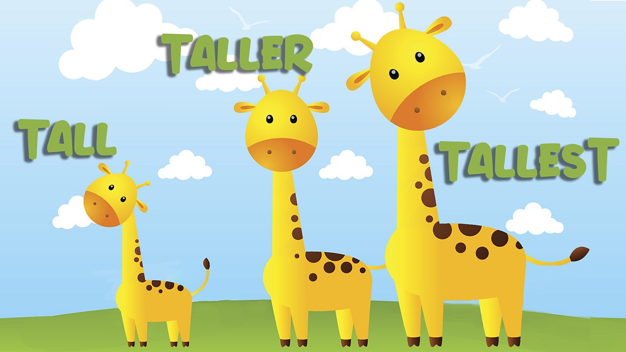 three giraffes lined up from left to right with the words tall, taller and tallest next to them, respectively.