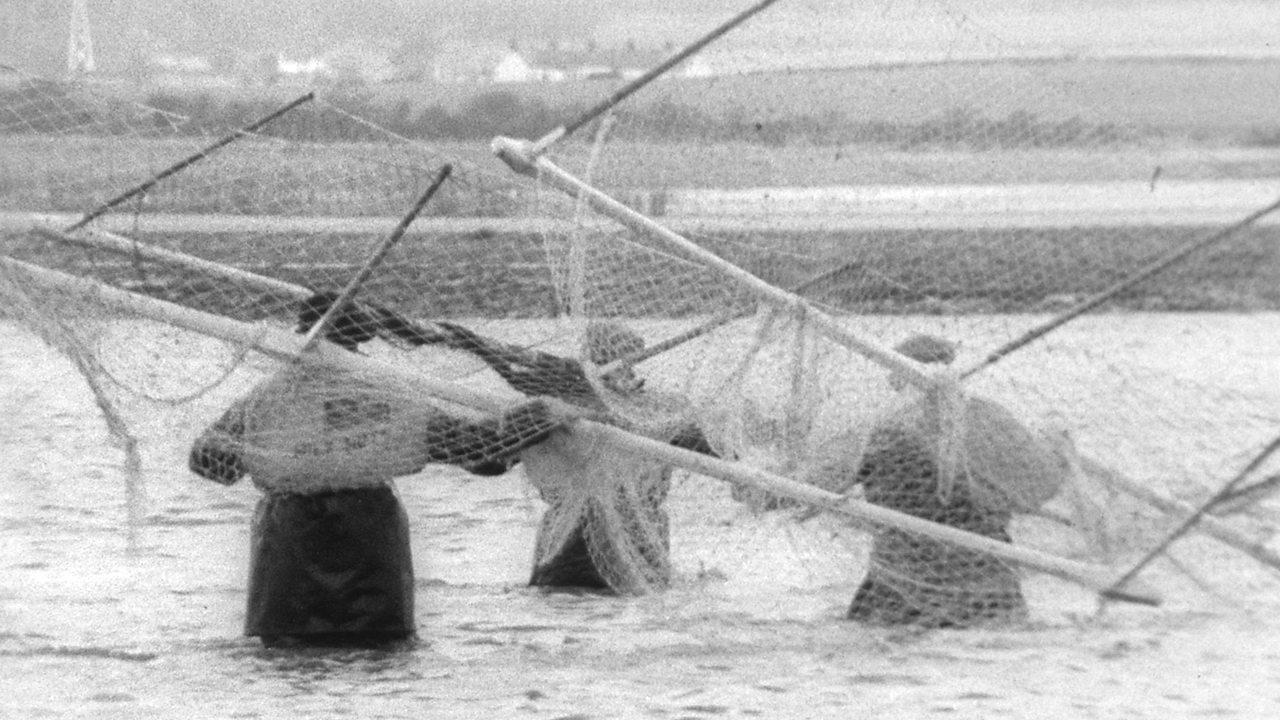 Haaf netting, 1965