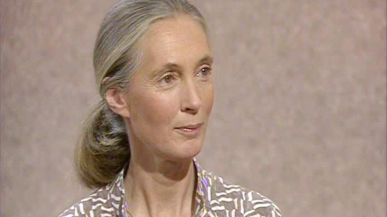 Jane Goodall, 1986