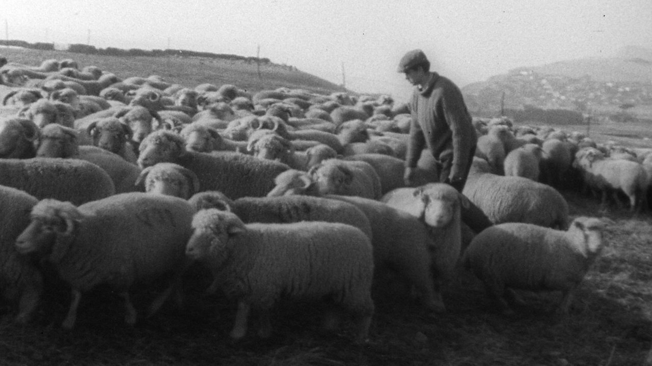 How well do shepherds know their flock? 1963