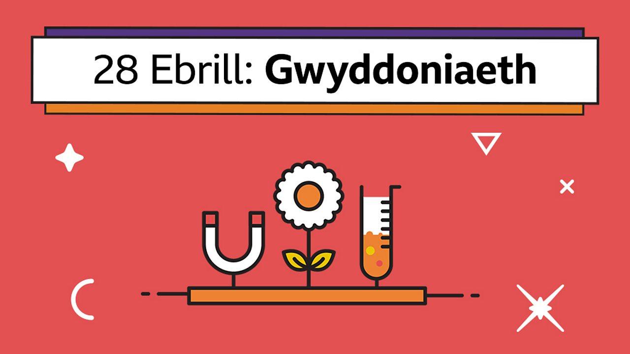 Cadwynau bwyd/Dosbarthiadau (Food chains/Classes)