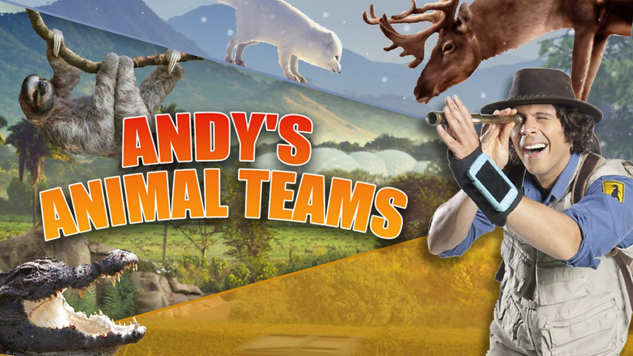 Andy's Animal Teams