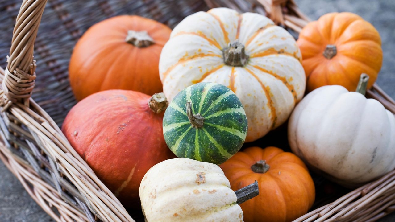 Pumpkins and other squashes