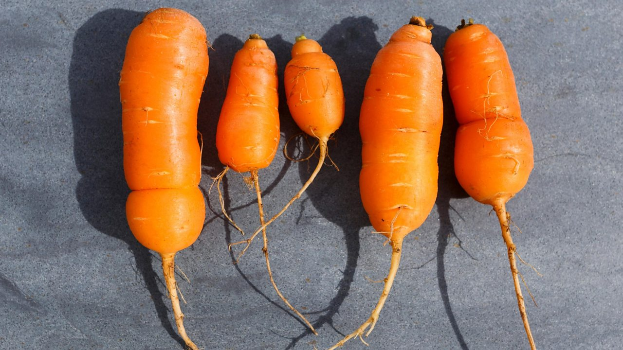 Wonky carrots