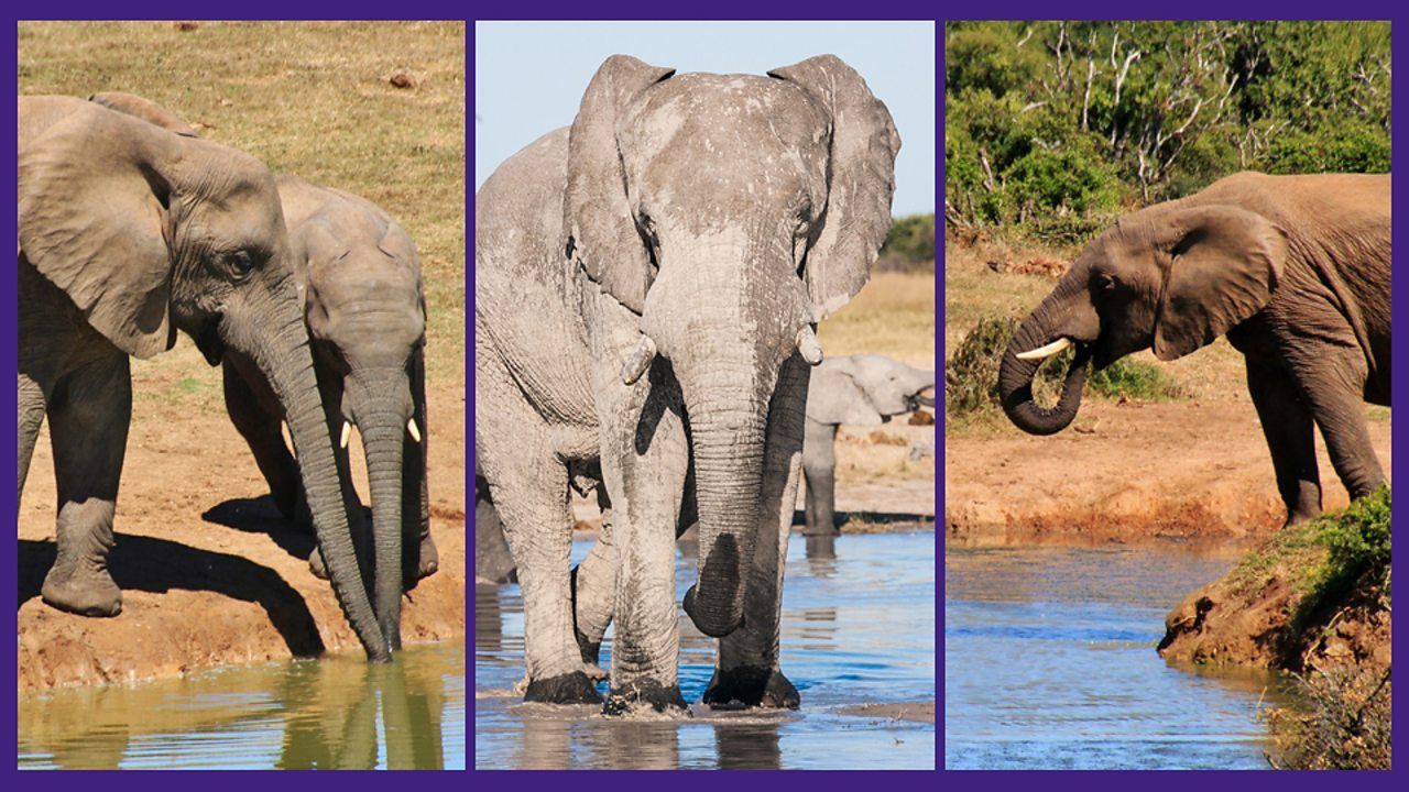 3. Elephants and all the animals