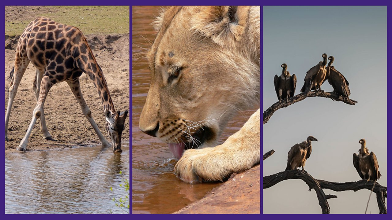 2. Lions and vultures