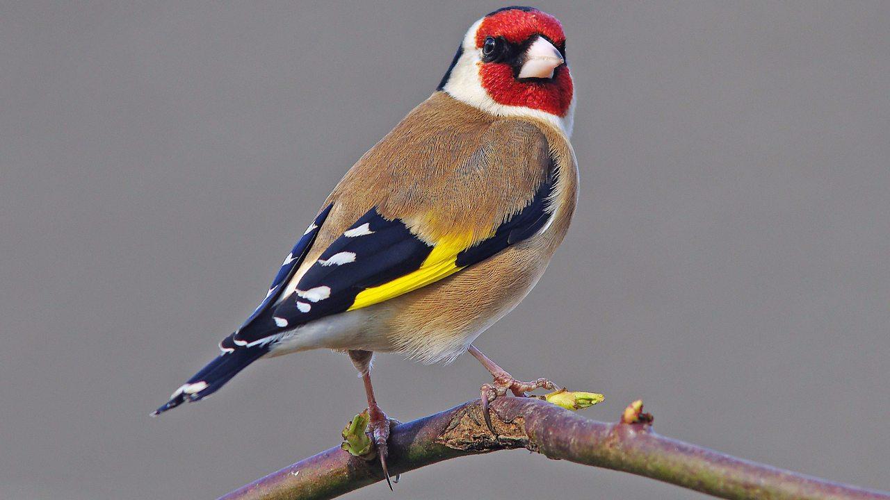 Five ways to make bird watching a fun family activity