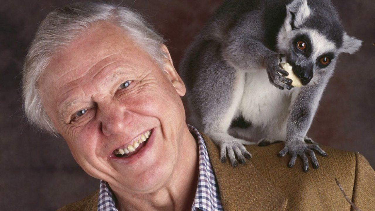 Quiz: Attenborough's animals